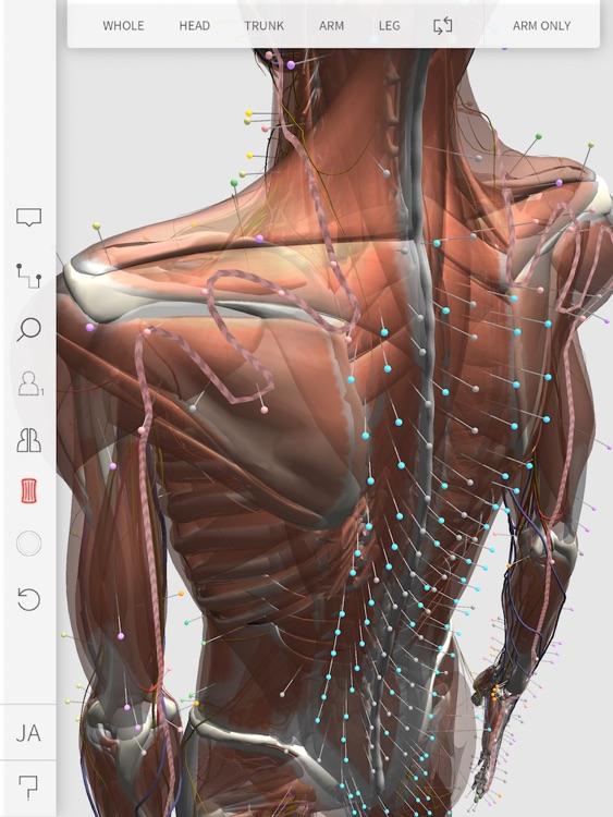 3D Acupoint screenshot-3