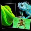 ヘビ トカゲ クモ綱 ワニ - 動物 爬虫類 壁紙 Wallpapers