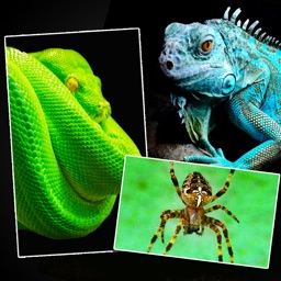 Snakes, Spiders, Lizards and Reptiles - Animals Wallpapers