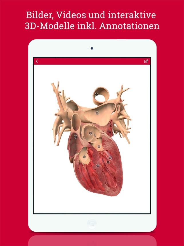DocCheck Flexikon – encyclopedia for medicine, pharmacy and medical ...