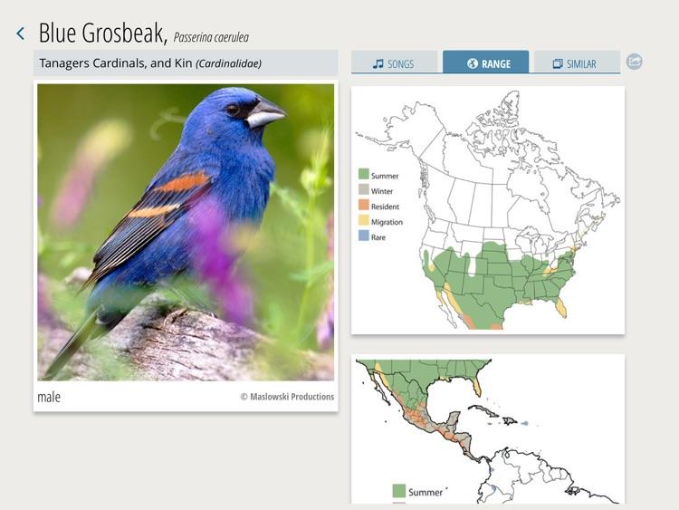 A Chorus of Songbirds screenshot-3