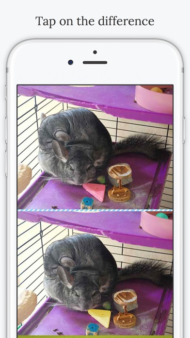 download Find the Difference in Chinchilla apps 1