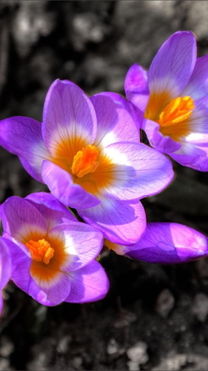 Flowers HD Wallpaper - Great Collection