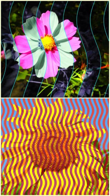 StripeImager - Stripe,Check,Zebra Pattern Art Generator