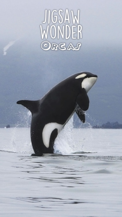 Orca Puzzles for Kids Free Jigsaw Wonder Edition screenshot-4