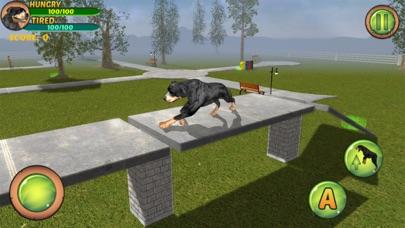 Download Rottweiler Dog Life Simulator for Pc