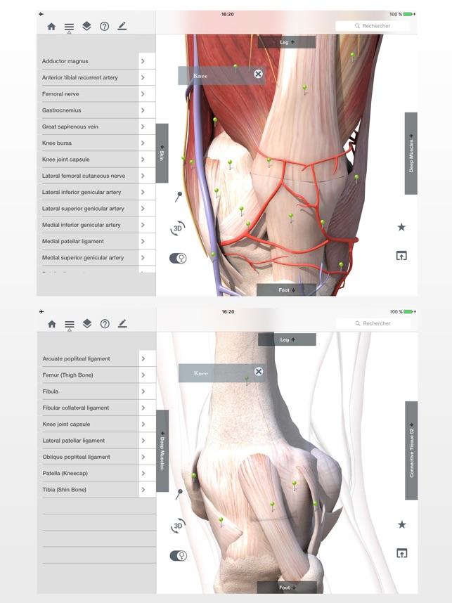 Tolle Muskelanatomie App Galerie - Anatomie Von Menschlichen ...