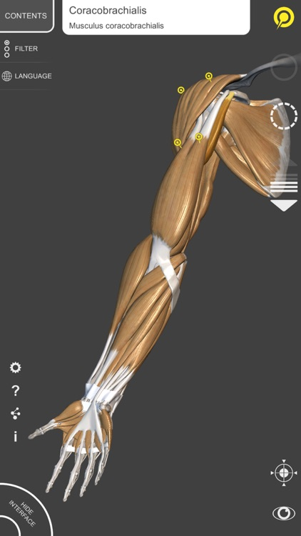 3D Anatomy for the Artist | v. 1.2 screenshot-3