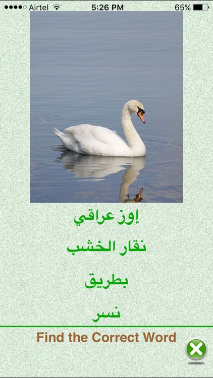FlashCards Arabic Lesson