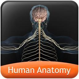 Human anatomy explorer Nervous System