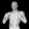 360 Anatomy for Artists HD: Male Figure