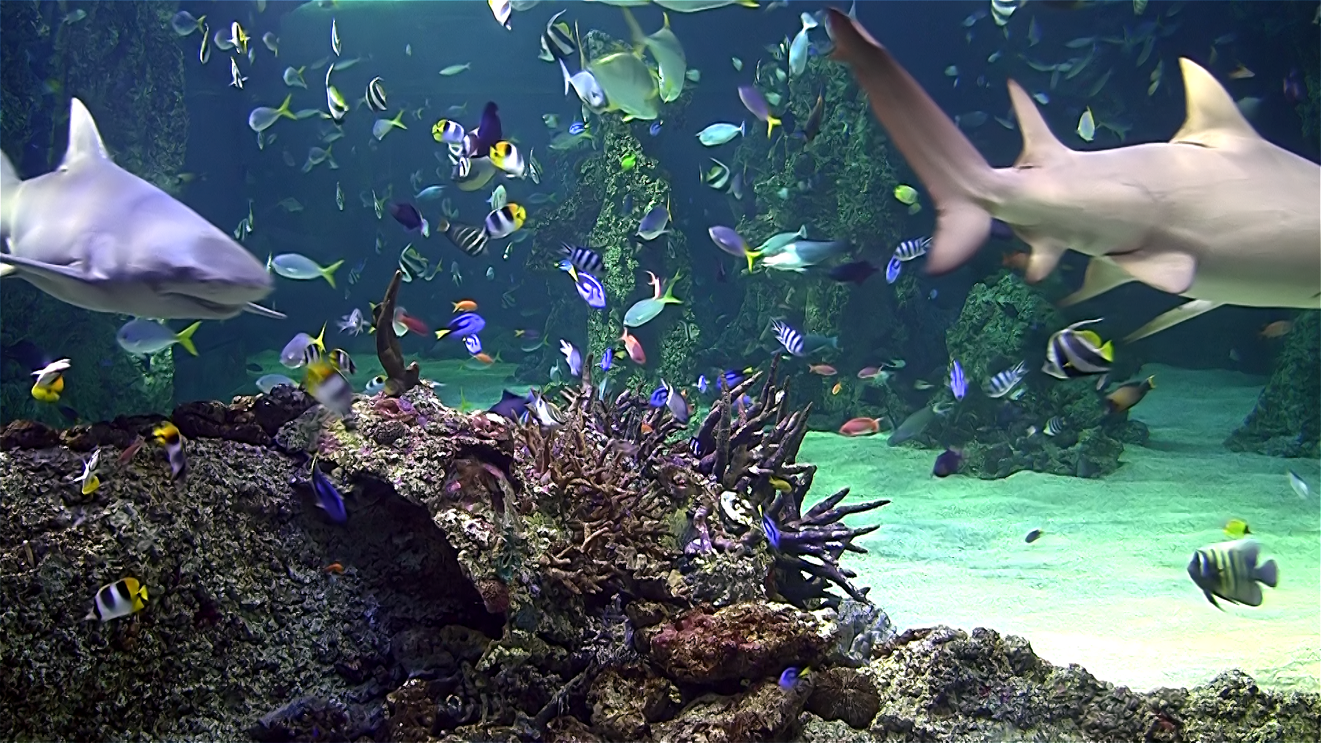 Aquarium live HD TV: Coral reef scenes with relaxing nature & ocean sounds for stress relief screenshot 1