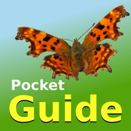 Pocket Guide UK Butterflies