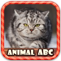 Animal Picture Know ABC