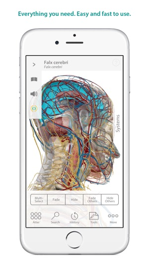 Human Anatomy Atlas – 3D Anatomical Model of the Human Body on the ...