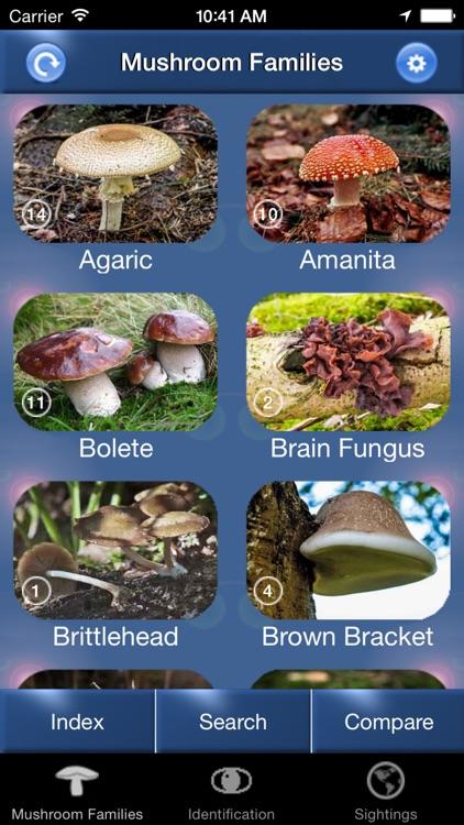 Mushroom Id North America - Fungi Identification Guide to Toadstools and Mushrooms
