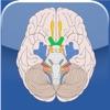 Cranial Nerves ~ Pocket Clinical Resource