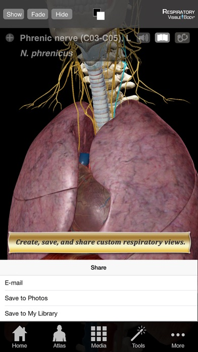 Respiratory Anatomy Atlas: Essential Reference for Students and Healthcare Professionalsのおすすめ画像3