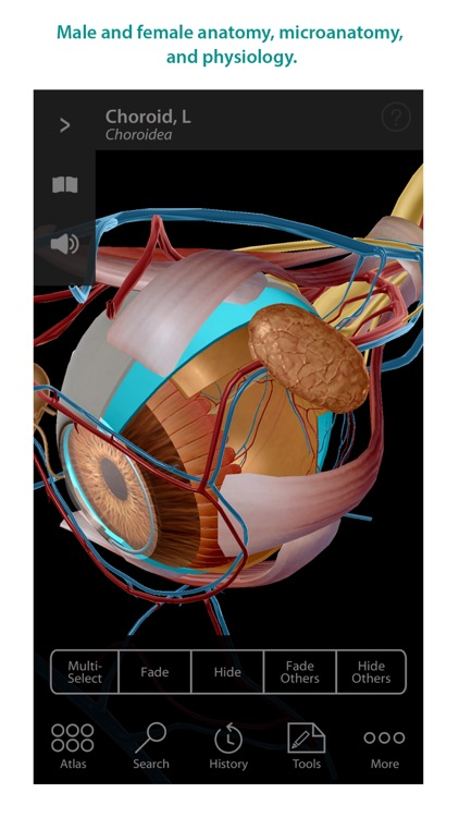 Human Anatomy Atlas – 3D Anatomical Model of the Human Body screenshot-3