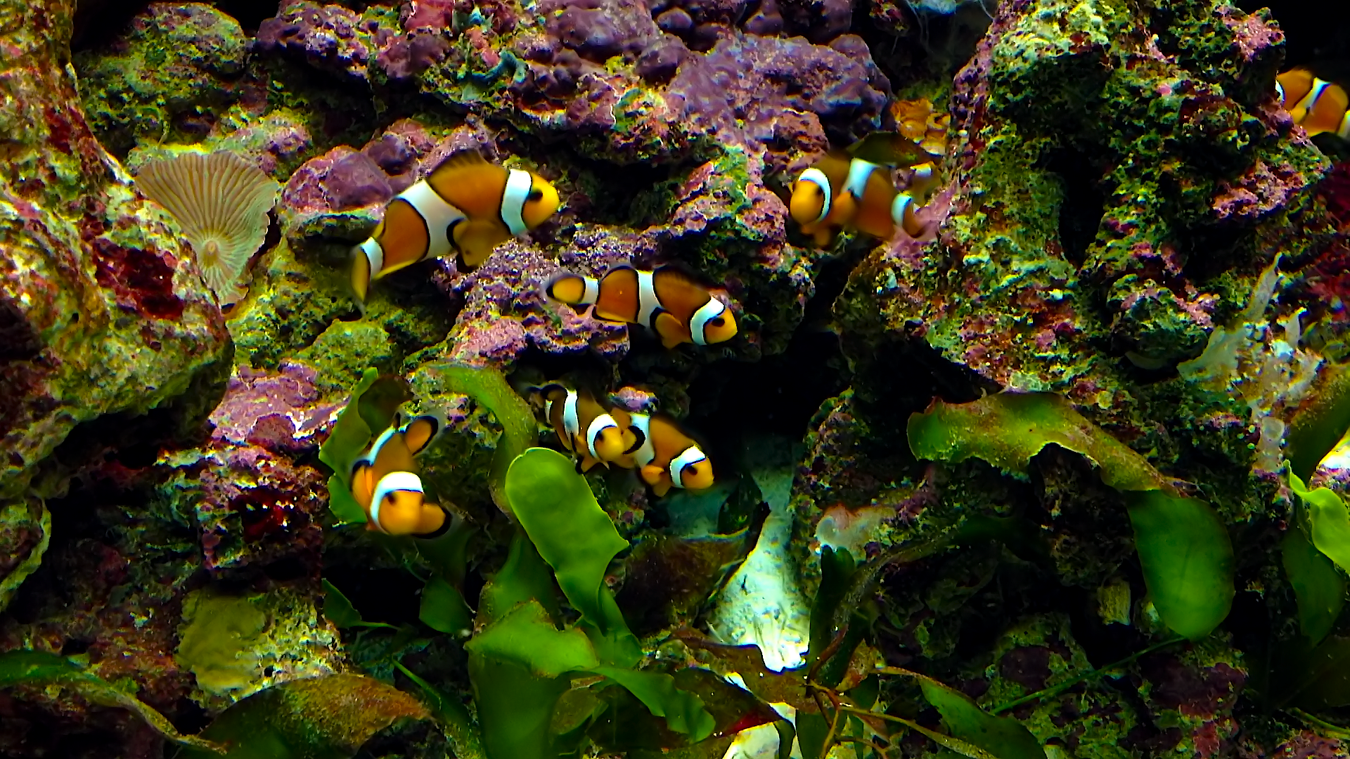 Aquarium live HD TV: Coral reef scenes with relaxing nature & ocean sounds for stress relief screenshot 2