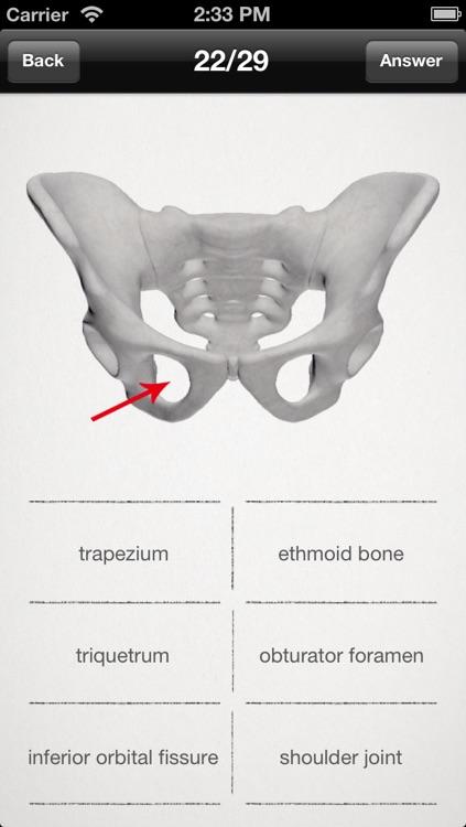 basic anatomy for all [bones] lite
