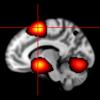 NeuroPub Visualizer