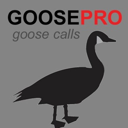 Canada Goose Calls & Goose Sounds for Hunting + BLUETOOTH COMPATIBLE