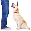 GR8 Media - How To Train Your Dog artwork