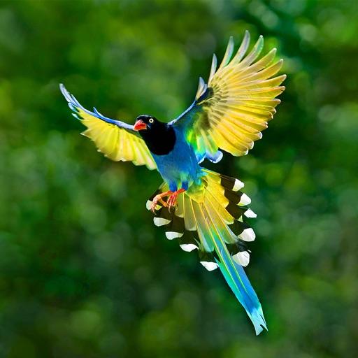 Bird Guide - Offline bird identification app