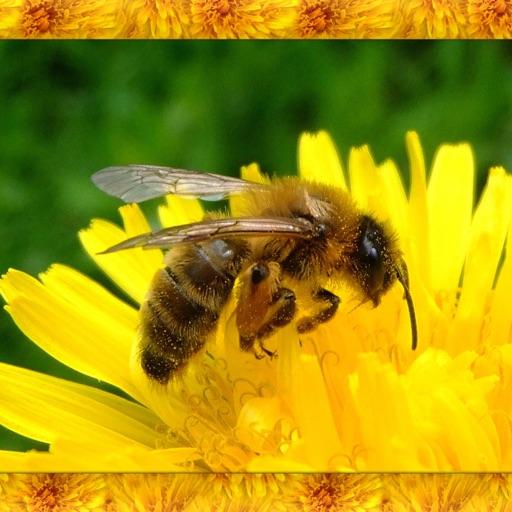 Honey Bee Simulator 3D