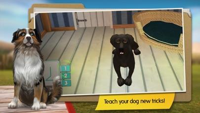 DogHotel Premium screenshot three