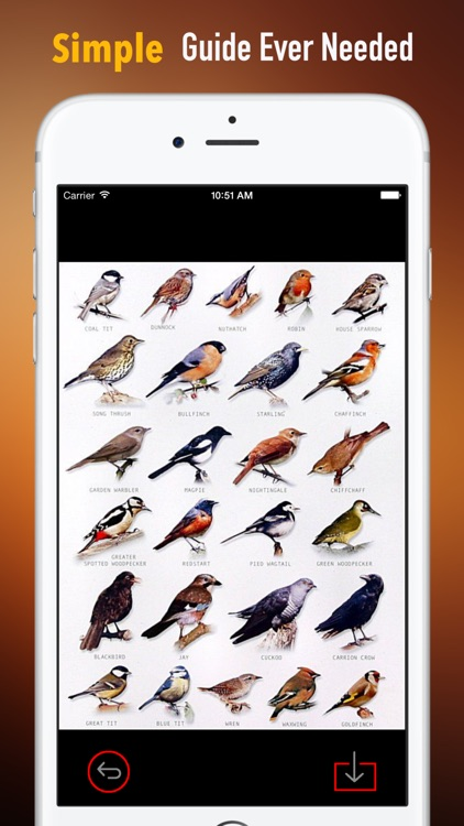 How to Identify a Bird:Tips and Tutorial