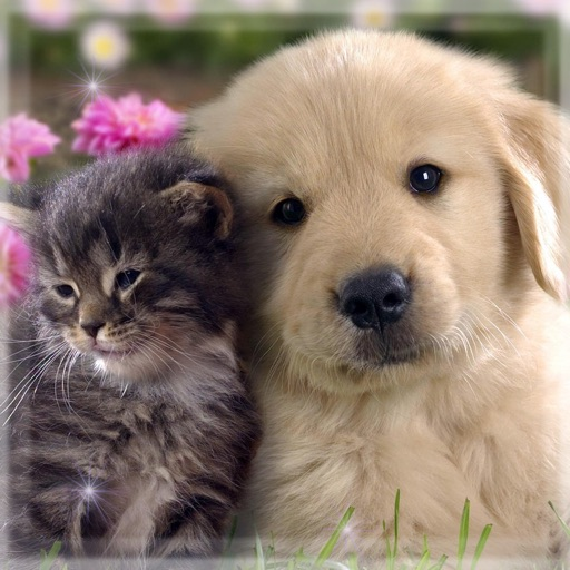 Cute Cats Dogs Hd Wallpapers Beautiful Pictures And Lock Screen Backgrounds Of Puppies And Kittens By Dusan Radmanovac
