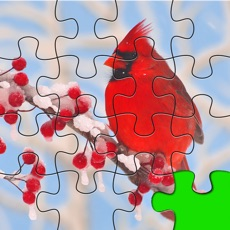 Activities of Puzzles Amazing Jigsaw Birds Collection Pro