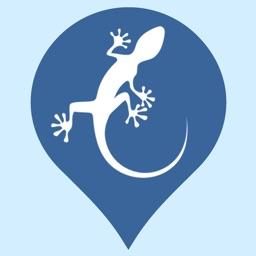 Regional Reptiles