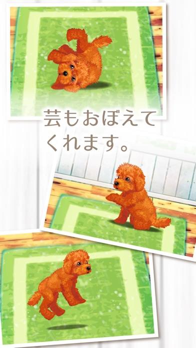 癒しの子犬育成ゲーム〜トイプードル編〜(無料)紹介画像3