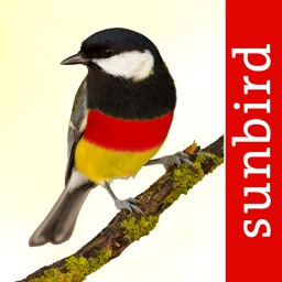 Birds of Germany - a field guide to identify the bird species native to Germany