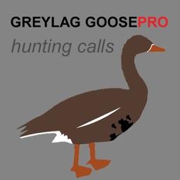 REAL Greylag Goose Hunting Calls + Greylag Goose CALLS & Greylag Goose Sounds!