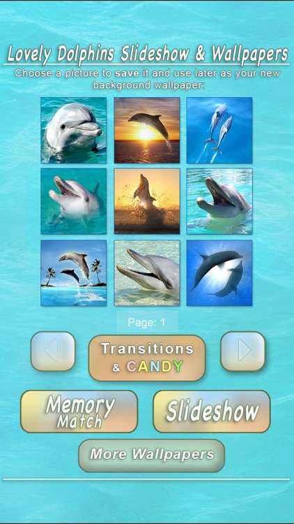 Lovely Dolphins Slideshow & Wallpapers screenshot-3