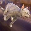ねこ 対 犬 戦争 シミュレータ レース   3d 猫 簡単 楽しい ゲーム 子供 アプリ 無料アイコン