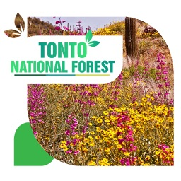 Tonto National Forest Travel Guide