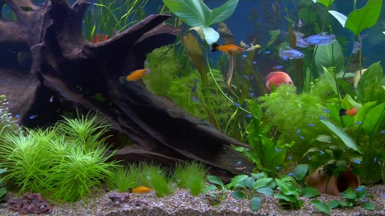 Crystal Creek Aquarium - Living Art