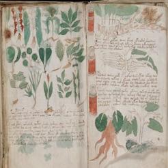 Voynich Manuscript!