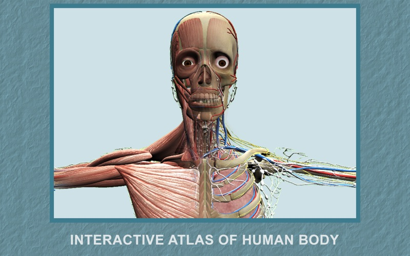 点击获取Explain 3D: Human body
