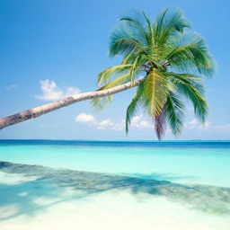 Beautiful Palm Tree Wallpapers