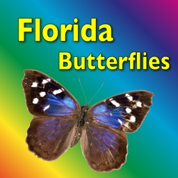 Butterflies and Moths - Guide to Common Species of Southern Florida