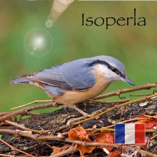 Oiseau ID France - Apprenez à reconnaître les oiseaux dans la nature et dans votre jardin