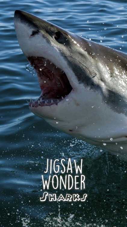 Shark Puzzles for Kids Jigsaw Wonder Collection screenshot-0