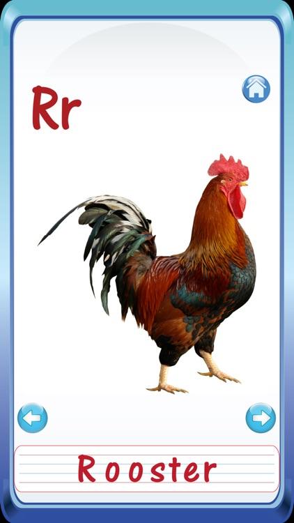 Baby Animals & Birds English ABC Alphabets Flash Cards for