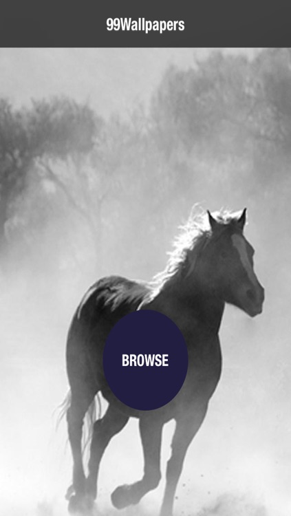 99 Wallpaper.s - Beautiful Backgrounds and Pictures of Horse and Pony
